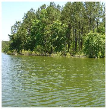 Pond fertilization for Fish pond fertilization